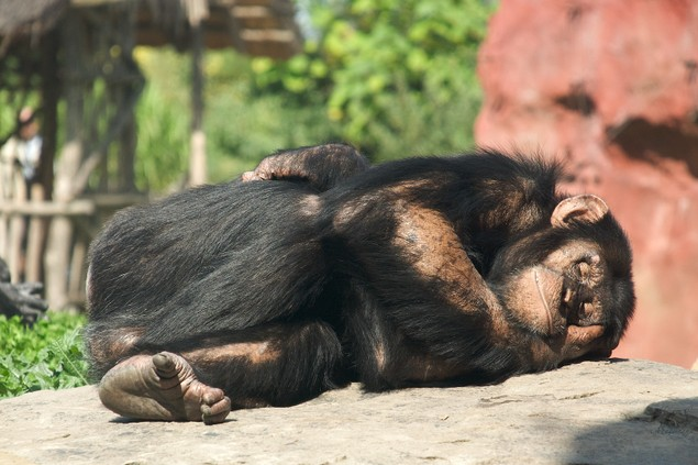 Sleepy Monkey 2009